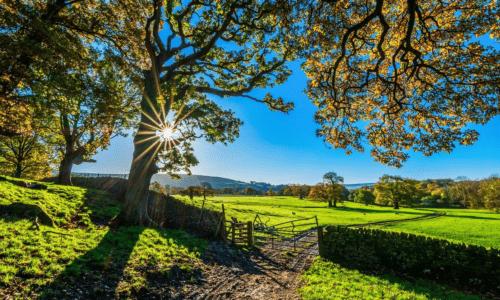 Gør din have klar til salg